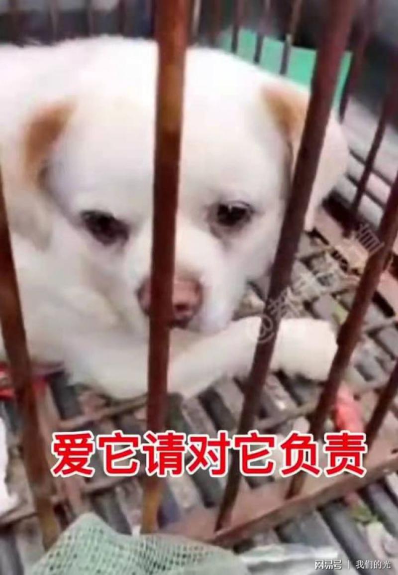 สาวเลือกทิ้งหมา เพราะไม่อยากจ่ายค่าปรับ ปล่อยหมาน้อยมองตาม แววตาเศร้า 210504jy5d8